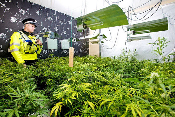 Cannabis Farm Source West Midlands Police 400px